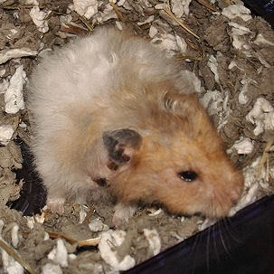 Hamster Worries